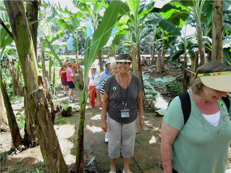Banana Plantation - Puerto Lemon, Costa Rica